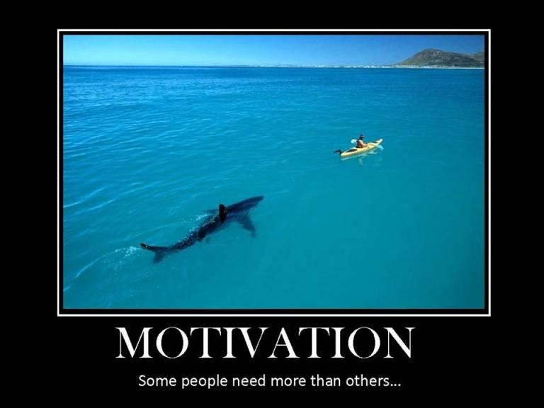 shark-week4-1024x803.jpg